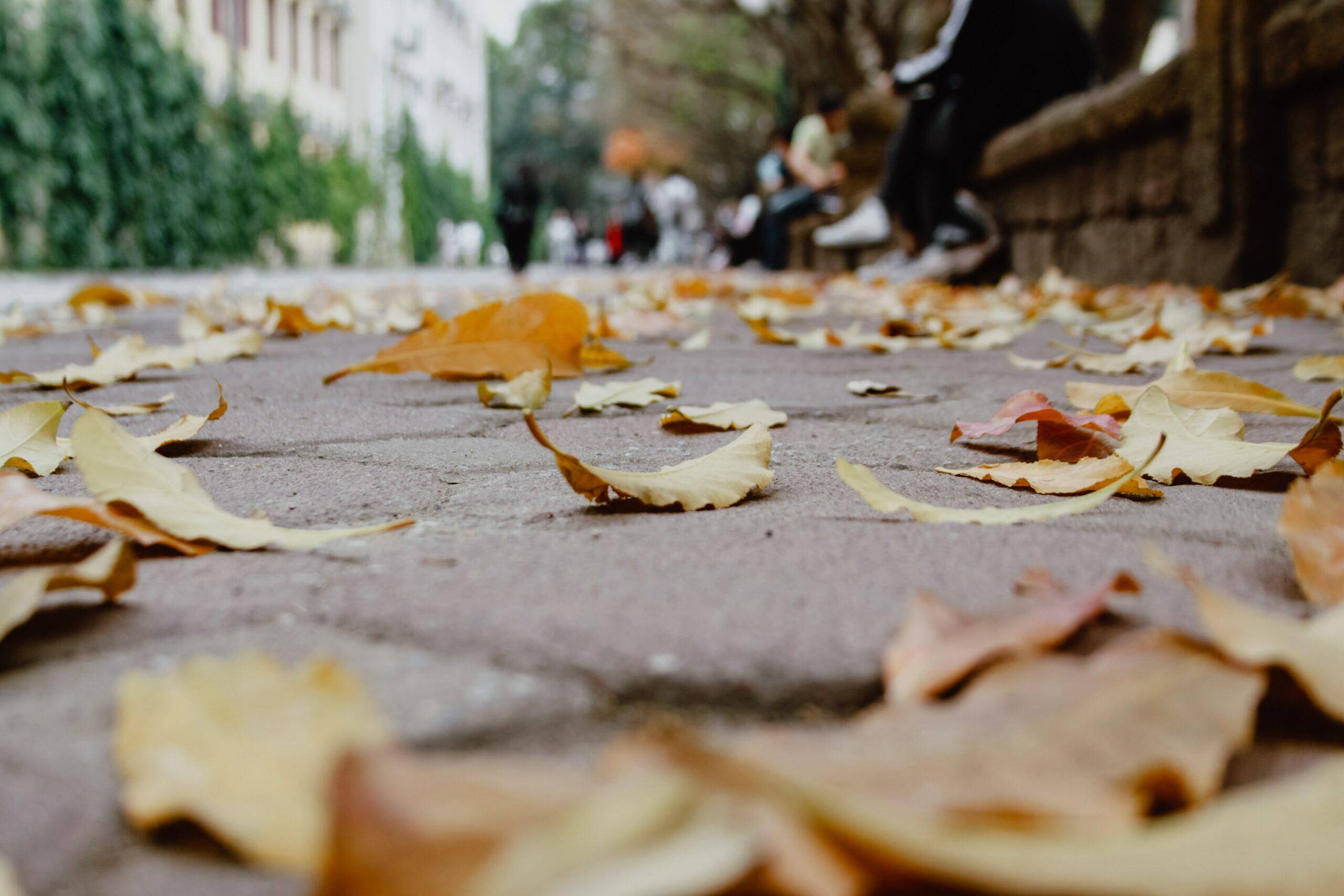 Thu Như Ý (tựa) – tản mạn về thơ
